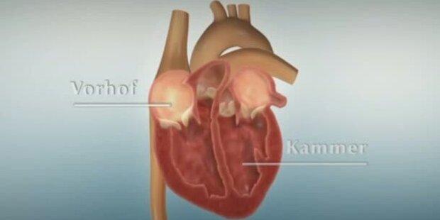 Aufbau und Funktion Herz