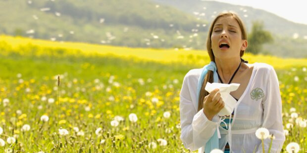 Ragweed-Pollen sorgen für Probleme