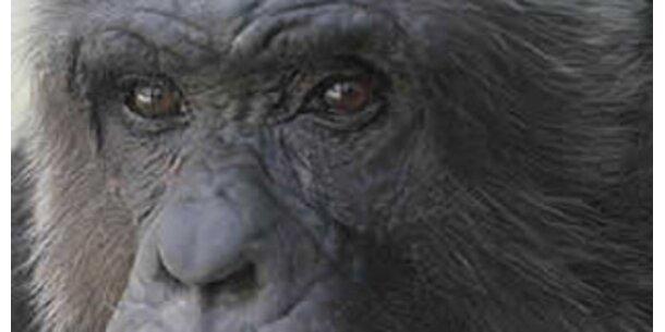 """Schimpanse """"Hiasl"""" ist kein Mensch"""