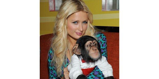 Paris steht auf Schimpansen