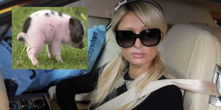 Paris Hilton mit Schwein im Bett