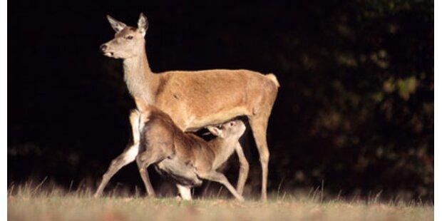 Lenker aus Irschen krachte in Hirschen