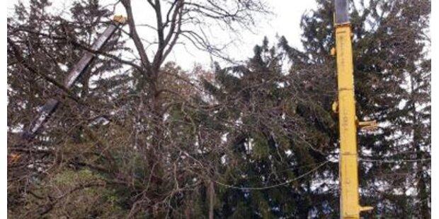 Tiroler Landwirt von Baum erschlagen
