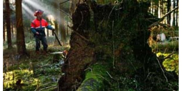 Tödlicher Unfall bei Holzarbeiten in Scheibbs