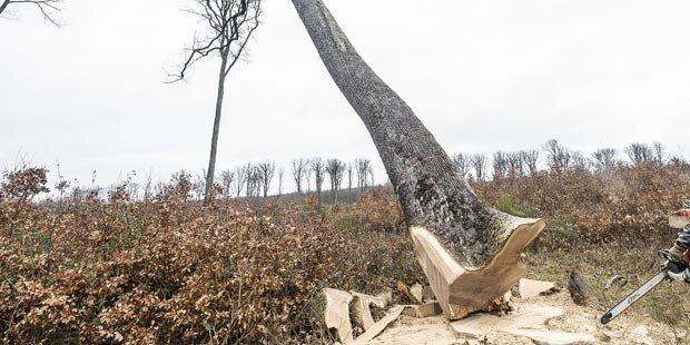 Wanderinnen von gefälltem Baum getroffen