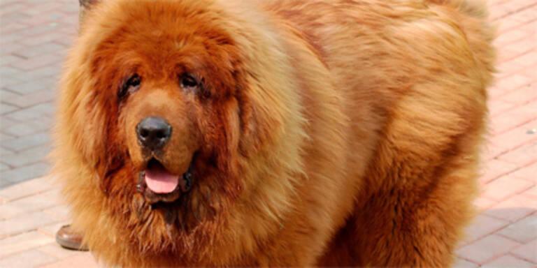 Dieser Hund ist 1,1 Mio Euro wert