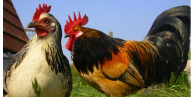 Huhn löste bei Weiz Ölalarm aus