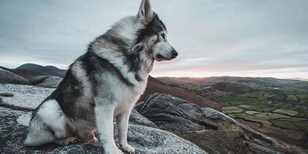 'Game of Thrones': Brans Starks Wolf ist mit 10 Jahren gestorben