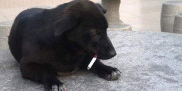 Hund raucht eine Schachtel pro Tag