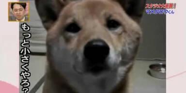 So süß! Hund mit Lautstärkeregler!