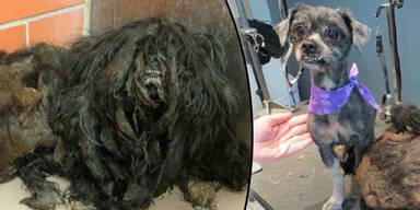 Misshandelter Hund
