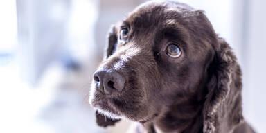 Haben streunende Hunde das Coronavirus verbreitet?