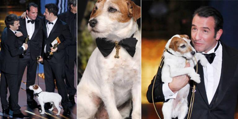 Oscar-Hund Uggie: Rücktritt wegen Krankheit