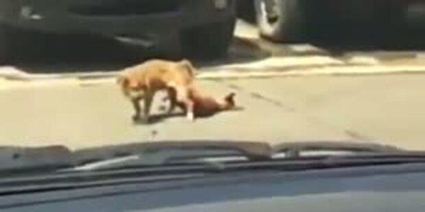 Tödlicher Orgasmus: Hund stirbt beim Sex