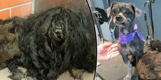 Hund bekommt Extrem-Makeover