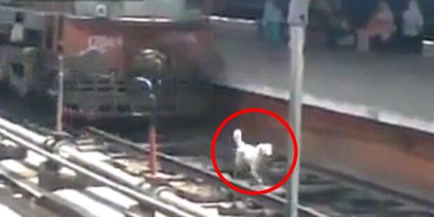 Hund wird von Zug überrollt und überlebt