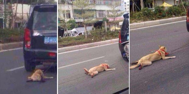 Hund an fahrendes Auto gekettet
