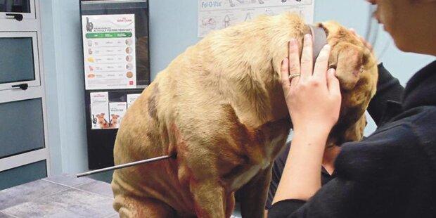Polizist schießt mit Pfeil auf Hund