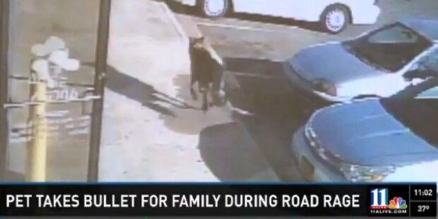 Hund schützte Kinder im Kugelhagel