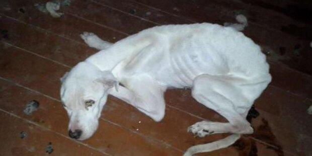 Tierquäler ließ Hunde brutal verhungern