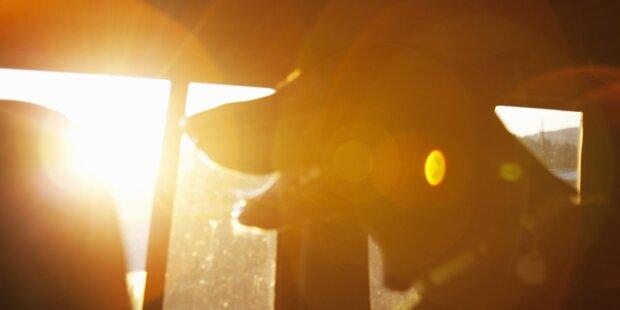 Frau rettet Hund aus Hitze-Auto und bekommt Ärger mit der Polizei