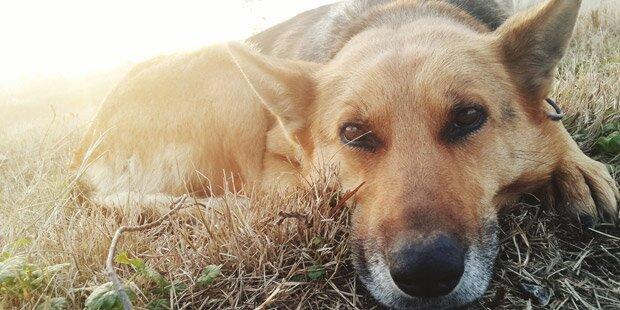 120 Hunde in Tierheim verbrannt