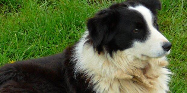 Hund verursacht Verkehrsunfall