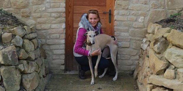 Tierhasser vergiftet Hund: 1.000 € Belohnung für Hinweise