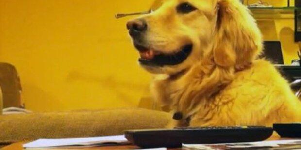 Hund rockt bei Gitarrenspiel ab
