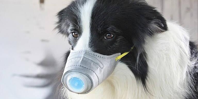 Hundebesitzer kaufen Schutzmasken für Haustiere