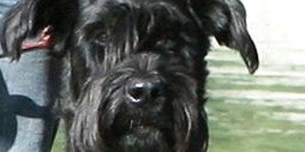 Polizeihund schnappt Kindergarten-Einbrecher