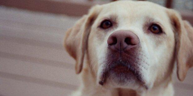 Hunde können Krebs erschnüffeln