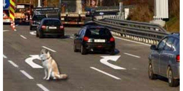 Hund auf Autobahn mit zwölf Schuss getötet