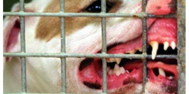 Schäferhund in NÖ biss drei Menschen