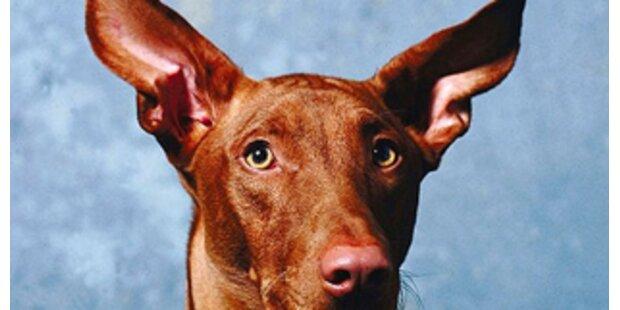 Hund erleichtete Räuber um Teile der Beute