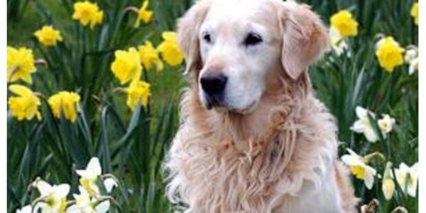Hund biss Dreijährigen in die Stirn