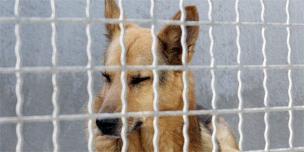 Waldviertel: Polizei nahm Frau 49 Hunde ab