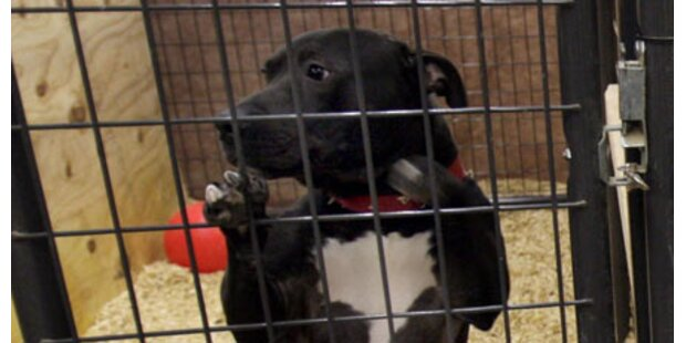 Polizei verhaftet Hundeschlachter