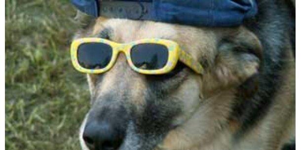 ÖSTERREICH sucht den süßesten Hund