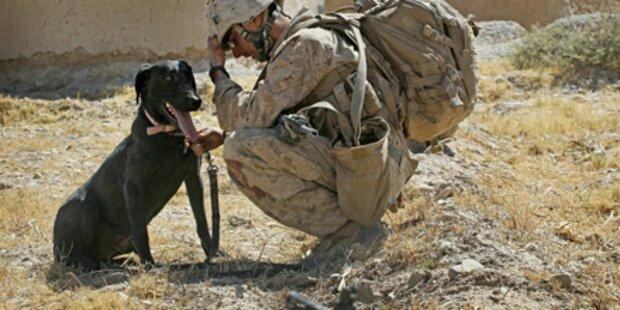Al-Kaida näht Bomben in Hunde ein