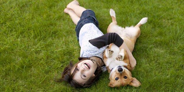 Alles was Sie über Hunde wissen sollten