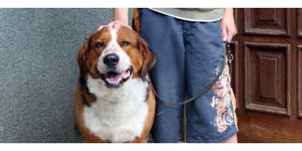 Kärntner Killerhund biss erneut zu