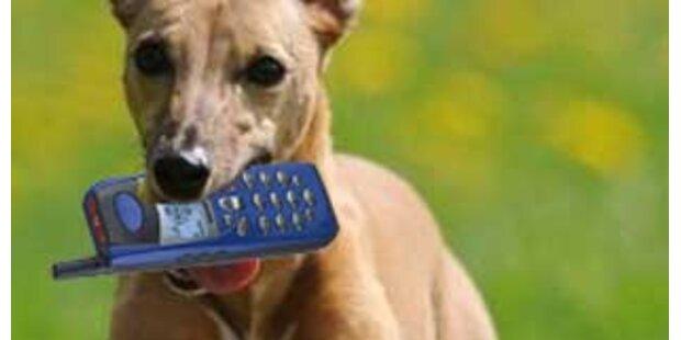 Hund rettete schwer verletztem Jäger das Leben