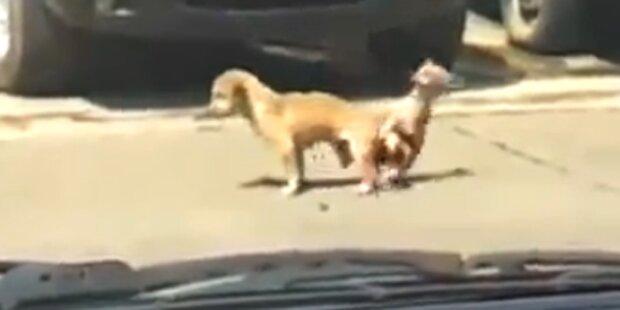 Video: Hund stirbt beim Sex