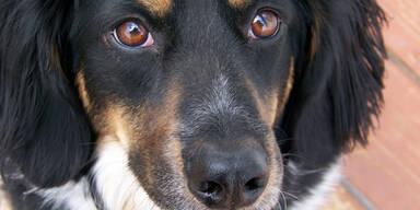 Mit Therapie-Hunden gegen den Stress