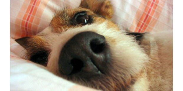 Fressnapf bietet Reisen mit Haustieren an