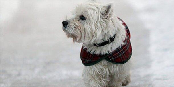 Hunde vor Eis und Schnee schützen