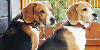 hunde tierheim