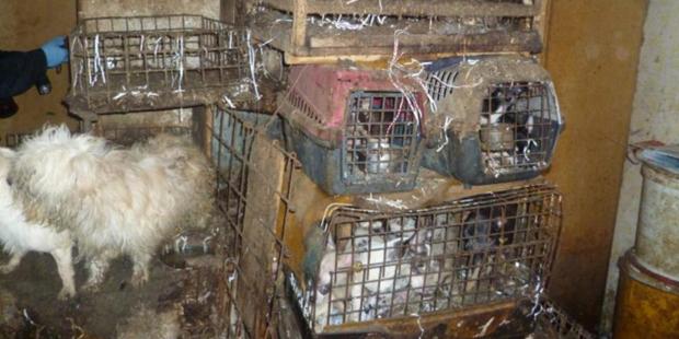 Unfassbare Tierquälerei: Mehr als 200 völlig verwahrloste Hunde in Tschechien befreit