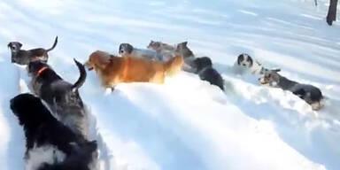 Diese Hunde haben die Zeit ihres Lebens